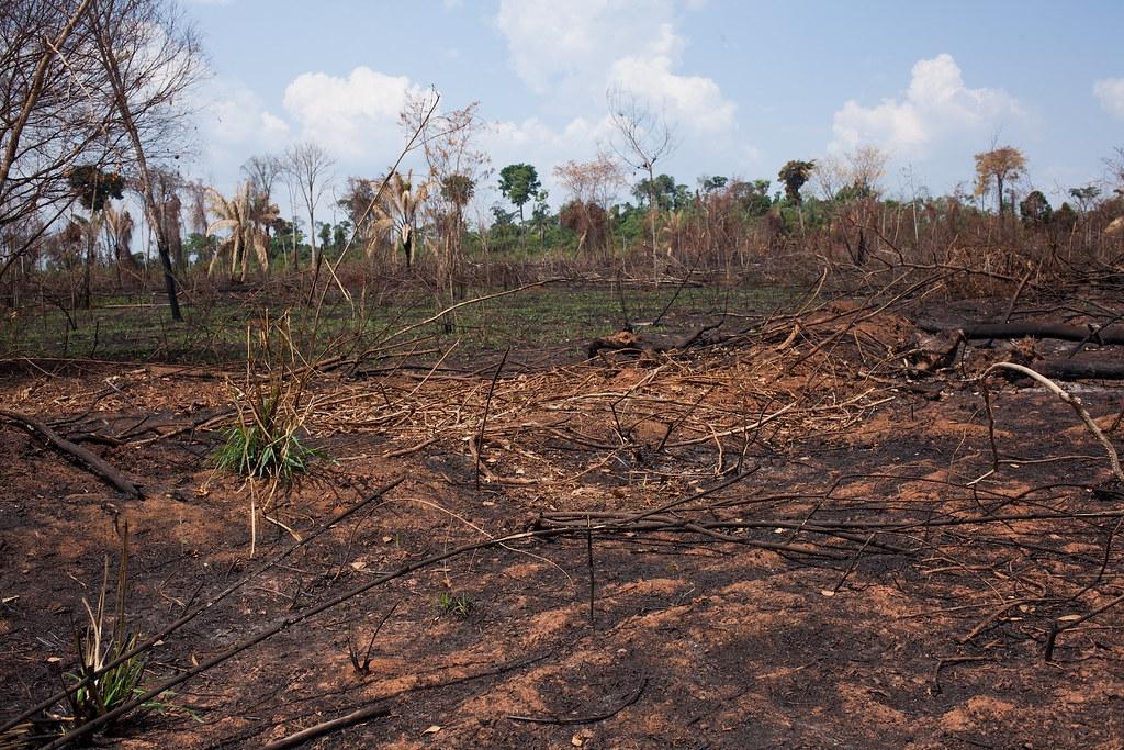 欣古勝利保護區內一處焚燒過後的現場。Ana Ionova攝;來源:Mongabay