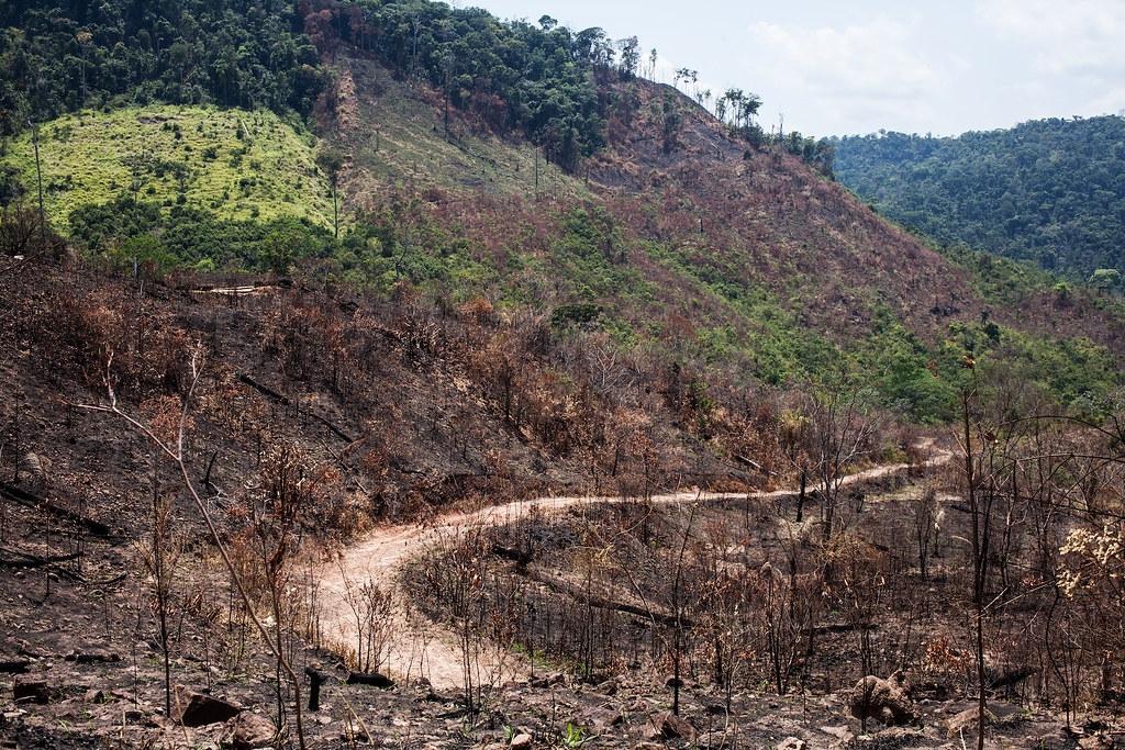 保護區內一條路徑,兩旁盡是焦黑的林木。Ana Ionova攝;來源:Mongabay
