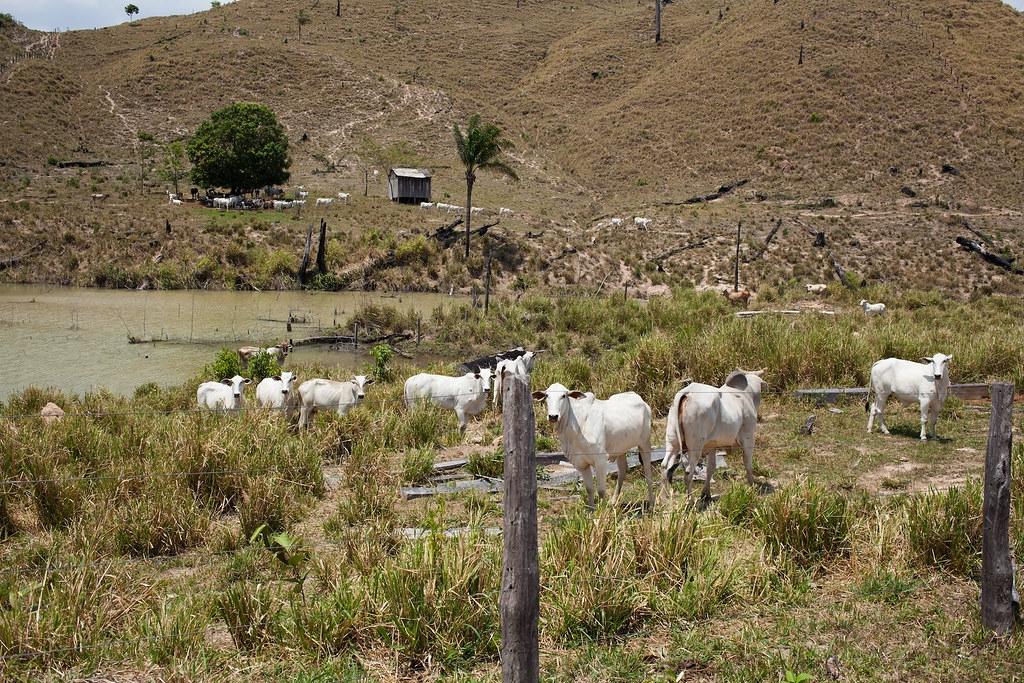 這座保護區內的牧場,過去曾經是雨林覆蓋地區。Ana Ionova攝;來源:Mongabay