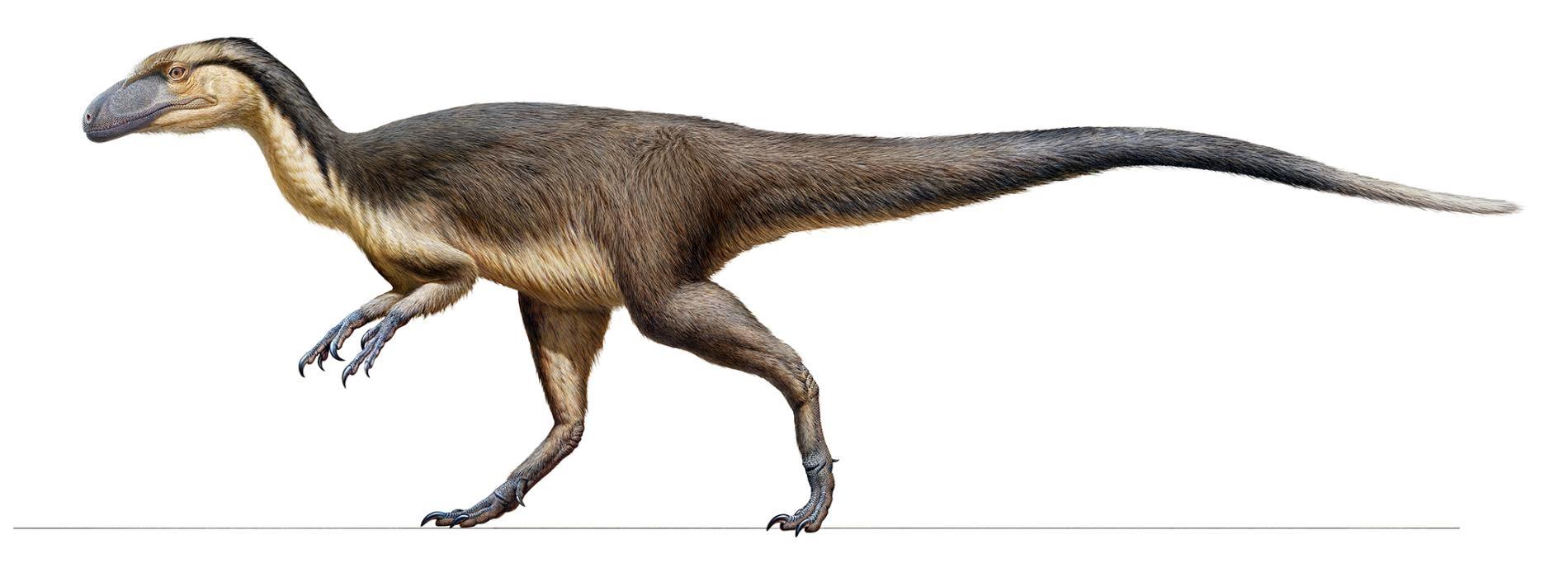 澳洲發現的一批羽毛化石證明了如畫中所繪的小型肉食恐龍曾長出隔熱羽毛以求在南極圈內生存。ILLUSTRATION BY PETER TRUSLER