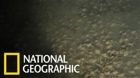 令人頭皮發麻的深海「鎧甲蝦」大軍