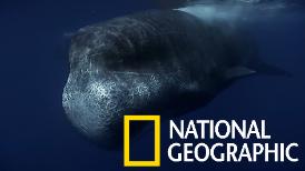 科學家海底直播,巨大驚喜突然現身!