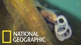 近距離觀察魚蝦的寄生蟲