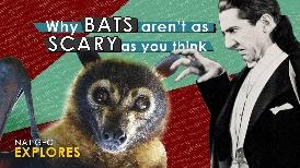 國家地理探索系列:蝙蝠沒你想像中可怕啦!