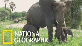 來見見這對雙胞胎大象兄妹