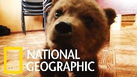 可愛警告:孤伶伶的棕熊寶寶終於有了新家