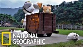喵星人當家! 走訪臺灣猴硐的「貓村」