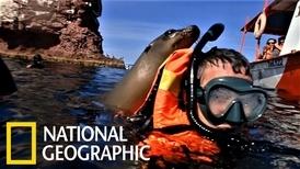 《國家地理》製作人度假去,遇上貪玩海獅!