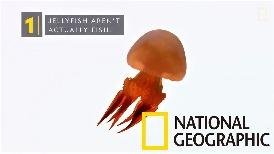 101動物教室:無腦、無骨、無血的水母