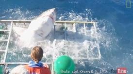 大白鯊衝撞潛籠  潛水夫驚險生死一瞬間