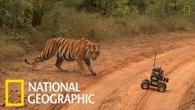 當老虎遇上遙控攝影機器人
