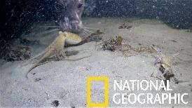 何謂章魚捕蟹,海豹在後!