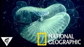 你可能沒聽過這種生物,但牠們也吃下了微塑膠顆粒