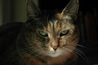 你也是貓咪溝通師嗎?有少部分的人能讀懂喵星人的表情呦!