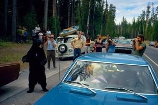 與熊共「舞」