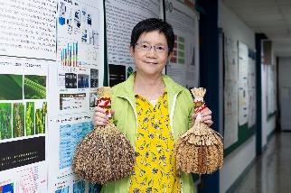 山地陸稻很有事!破解臺灣蓬萊米身世,發現南島語族遷徙線索