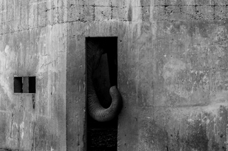 孤獨的大象