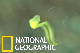 你或許聽過「鼻涕蟲」,但你有聽過「鼻涕屋」嗎?