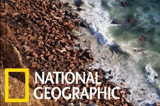 這座海灘上為什麼有2萬隻海象?