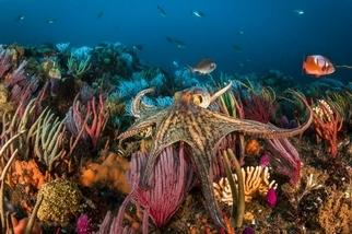 養更多章魚來吃道德嗎?