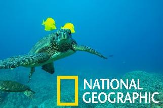 綠蠵龜是魚類的移動buffet桌!