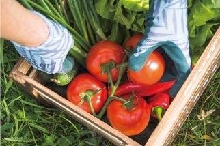 友善農作是新食代的解方嗎?