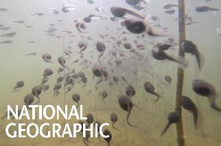 跟蝌蚪大軍一起在水中搖擺!