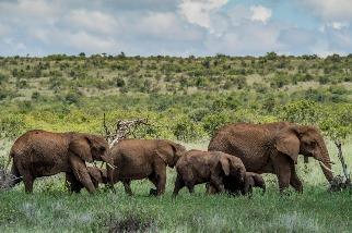 野生動物觀光因COVID-19停罷,盜獵的威脅卻仍揮之不去