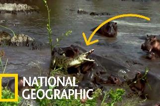 求尼羅鱷的心理陰影面積……