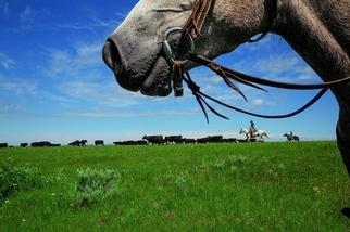大草原上的分歧