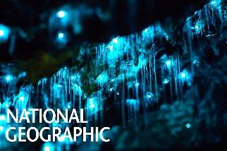 紐西蘭威托莫洞穴裡的奇幻「螢光蟲」!