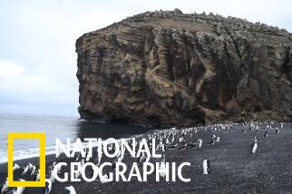 迪塞普遜島上的企鵝群