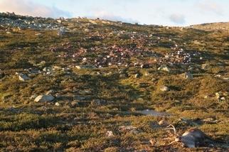 科學家研究「恐怖地景」:腐爛動物屍體也是生態系重要一環