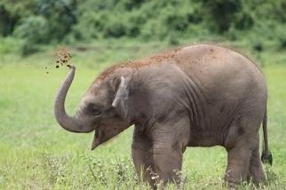 玩泥巴的象寶寶