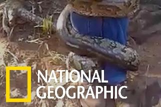 這名捕蛇人的情況有些「難纏」