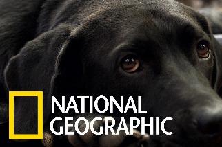 協助美國退伍軍人療傷的服務犬