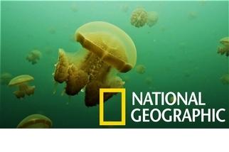 你以為帛琉才有水母湖?印尼也有呢!