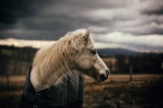 白色小馬,暴風將至