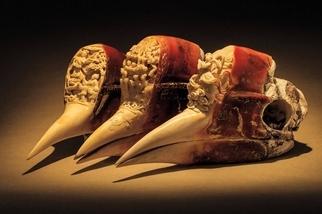 盔犀鳥的生存危機