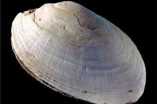 發現全世界最古老的藝術:50萬年前的鋸齒圖案