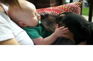 狗狗喜歡我們用什麼樣的語氣對牠說話?科學家:像對小寶寶一樣