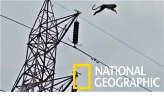 猴子受困高聳電塔,待救時突然一躍而下