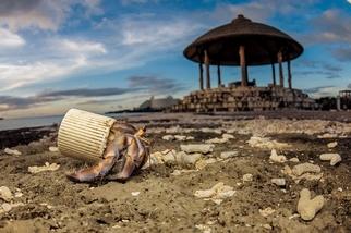 敲響海洋生態的警鐘