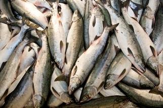當世界人口愈來愈多,海洋能餵飽我們嗎?