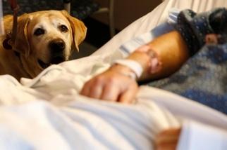 治療犬能創造奇蹟,但牠們喜歡自己的工作嗎?