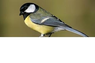 餵鳥器、雀鳥喙,還有達爾文的演化論