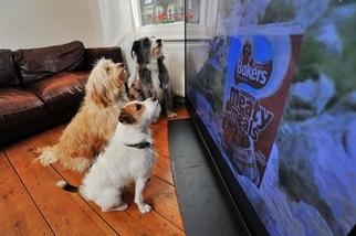 狗為什麼會看電視——而且還對它有反應?