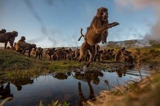 影像藝廊:最後的草食猴