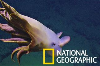 是什麼生物再次讓鸚鵡螺號上的科學家如此興奮?