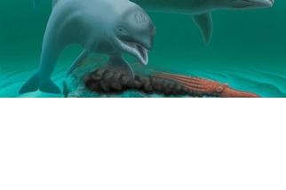 不靠牙齒也沒差,這種海豚用嘴巴吸東西